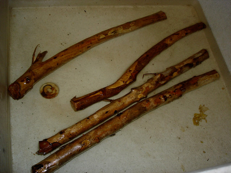 5) Soak sticks in water for at least 20 minutes